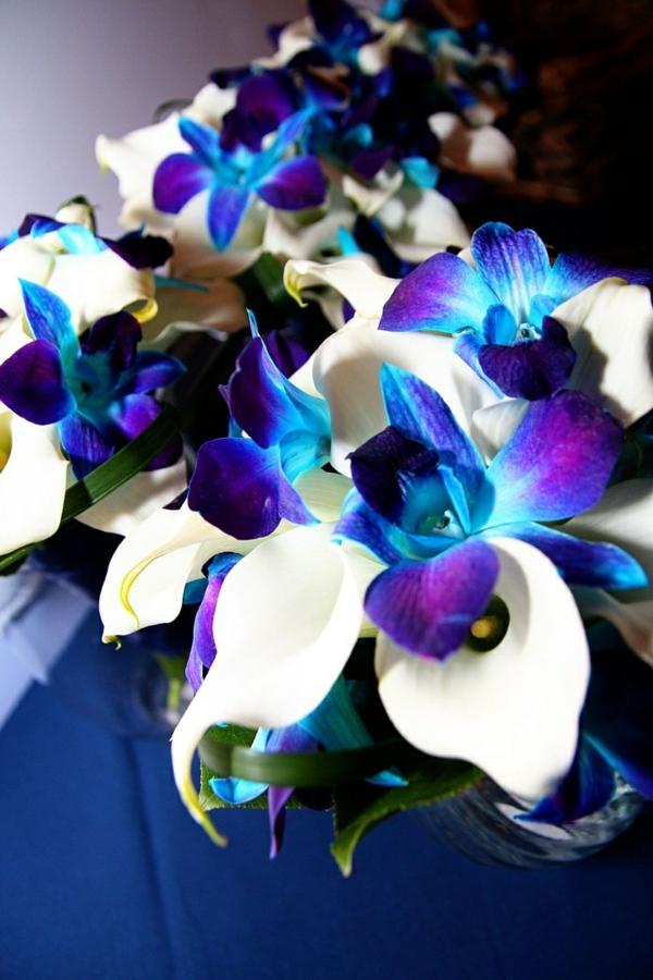 Blaue Orchidee  wunderschne Blume in Blau  Archzinenet