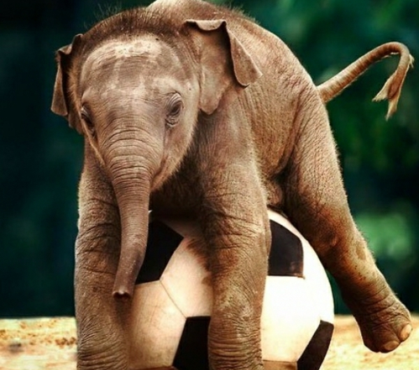 25 se Bilder vom Baby Elefant