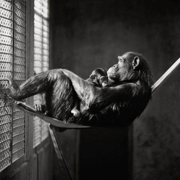 60 Meisterwerke der schwarz wei Fotografie  Archzinenet