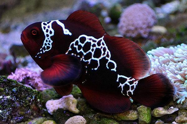 50 wunderschne Fische  Bilder zum Erstaunen