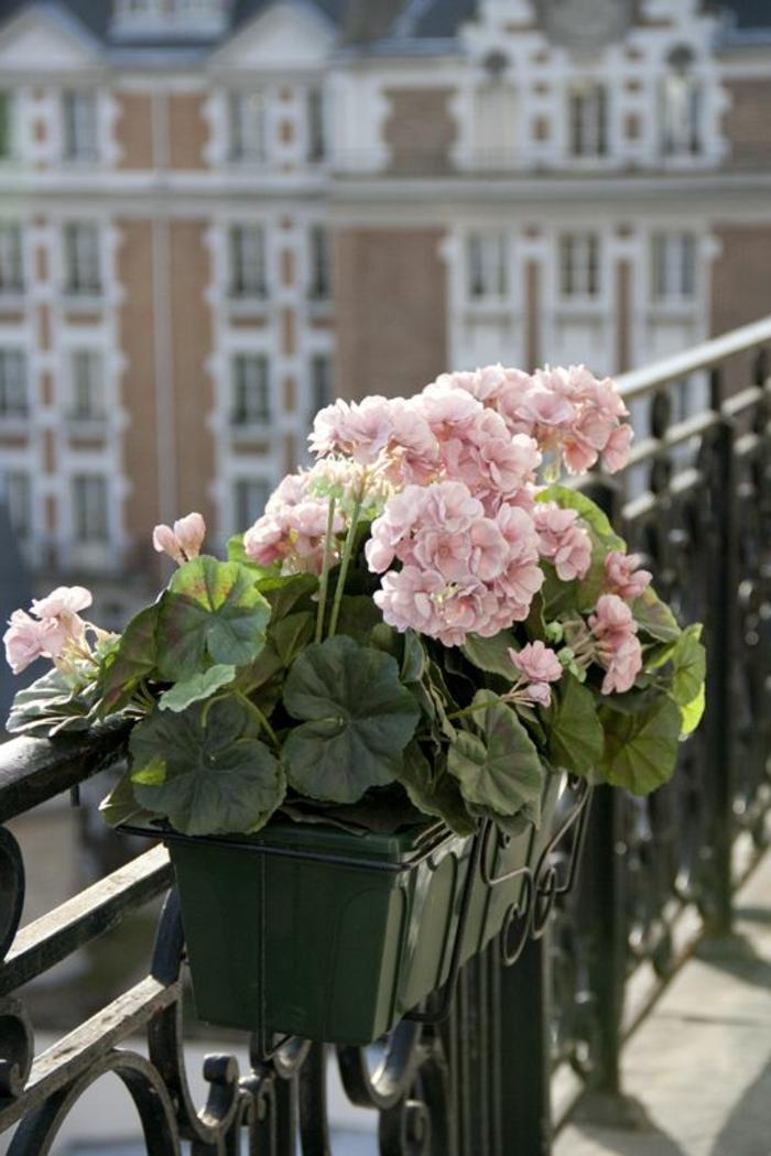 Balkon Blumen fr eine schne Auengestaltung