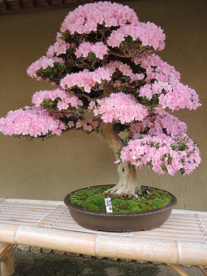 Wunderschne Bonsai Baum Kompositionen  Archzinenet