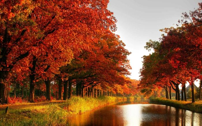 Free Fall Leaves Desktop Wallpaper 65 Sch 246 Ne Hintergrundbilder Zum Herbst