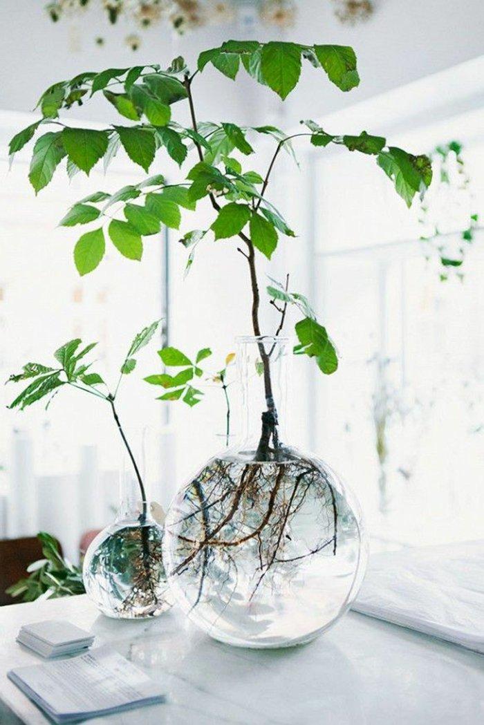 52 Frische Ideen Fr Zimmerpflanzen