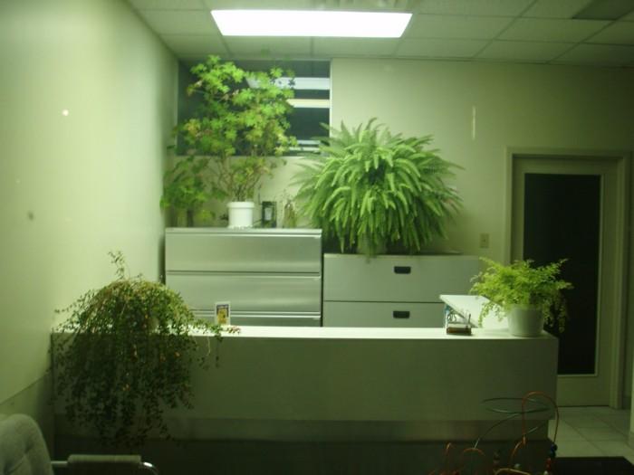Bropflanzen  der Arbeitsplatz wird grn  Archzinenet