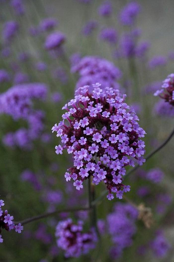 Die lila Blumen sind Symbol der Weiblichkeit  Archzinenet