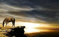 Mehr als 70 super schne Pferde Bilder!
