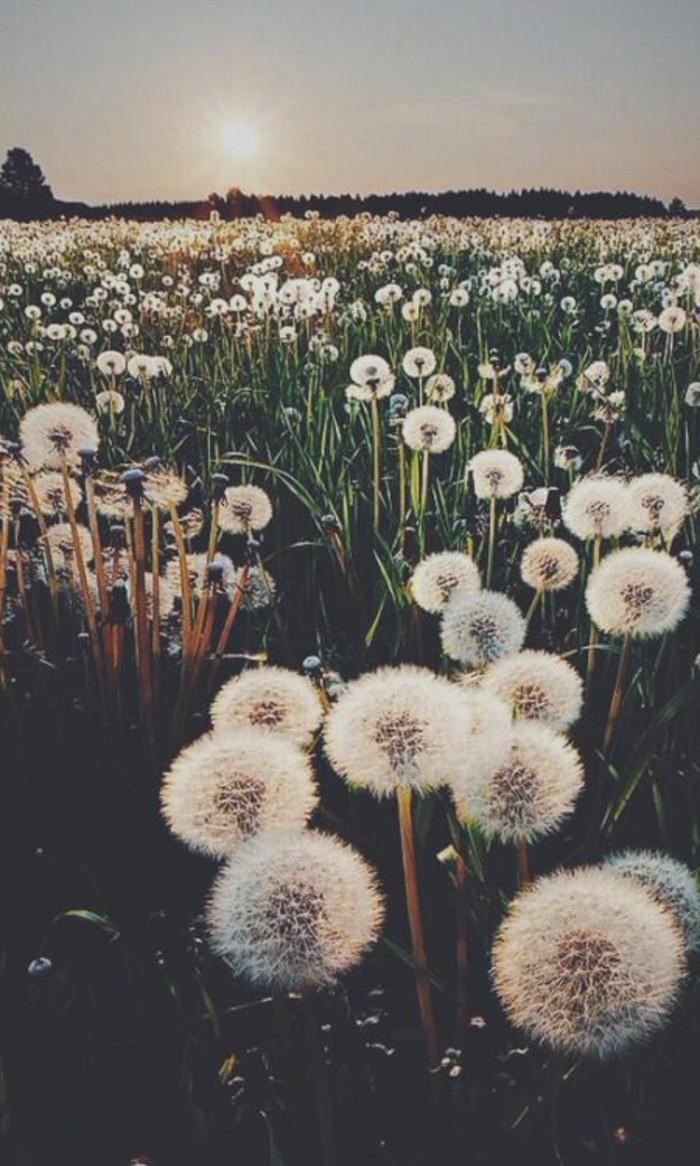 Lwenzahn Bilder  eine kleine gelbe Blume auf allen Wiesen