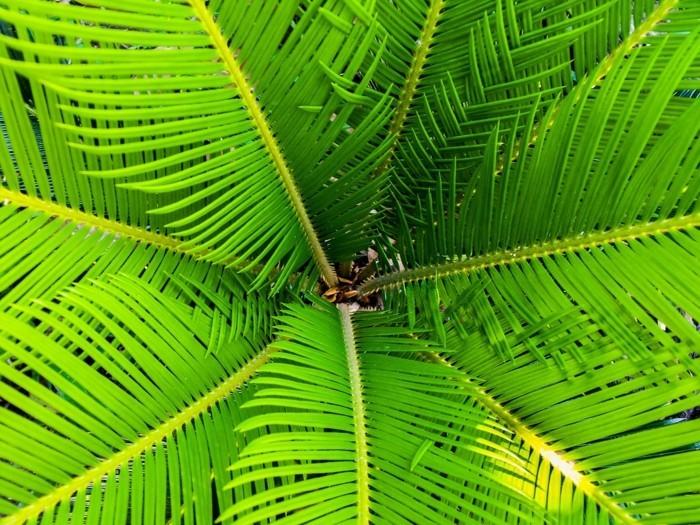 Exotische Pflanzen im Garten Informatives und Pflegetipps