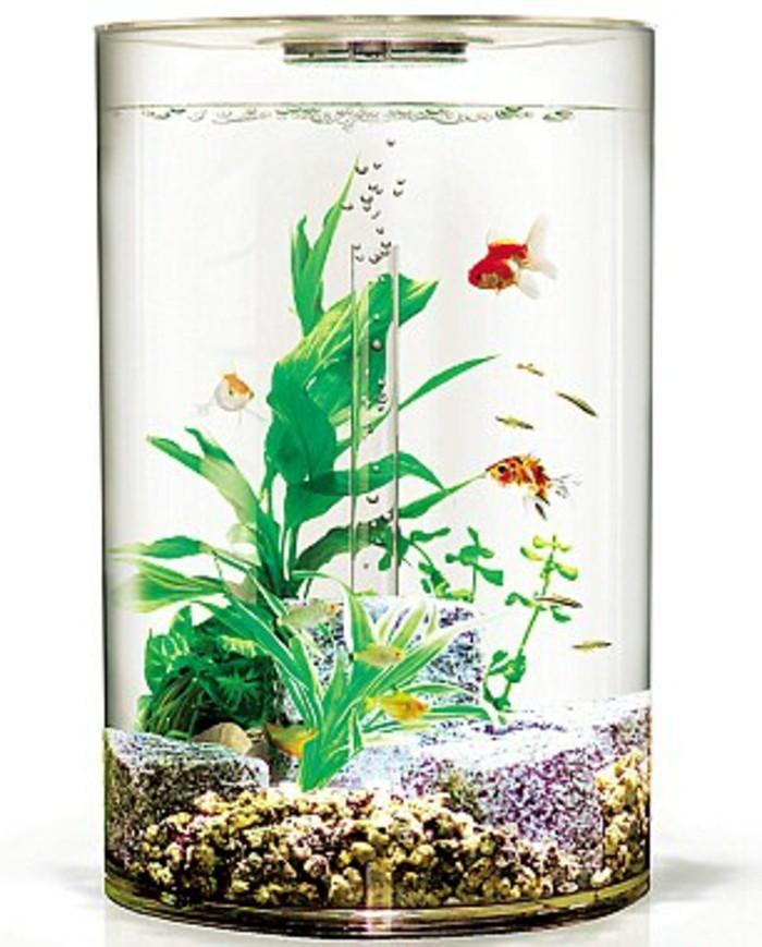 Aquarium Einrichtung sorgt fr das Wohlfhlen der Wassertiere  Archzinenet
