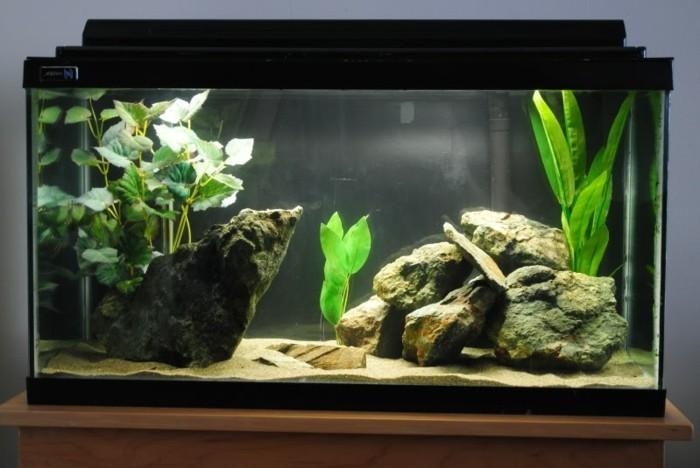 Aquarium Einrichtung sorgt fr das Wohlfhlen der