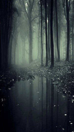aesthetic forest trees wallpapers landscape dark laptop phone fog crazy nothing tall backgrounds vibes spent better than friends there