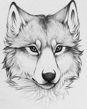 animals draw easy drawing pencil wolf sketch head inspiration otter step tutorials