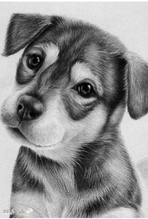 animals draw realistic drawings easy drawing pencil sketch animal puppy pencils simple step 1001