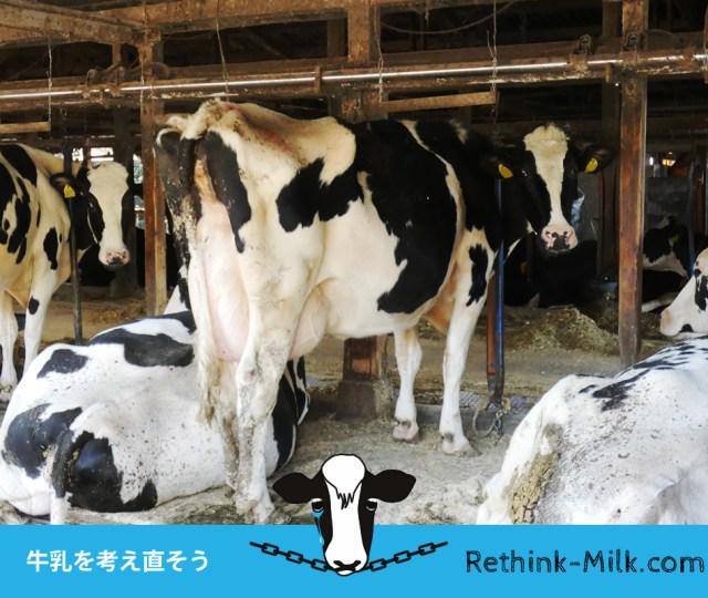 牛乳を考え直そう