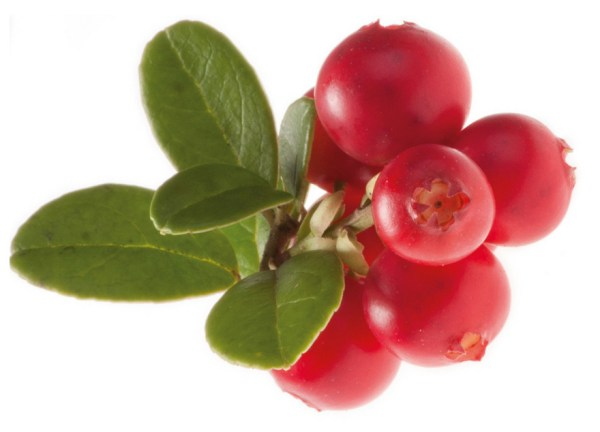 Wild lingonberries grow in the Arctic nature of Finland. They are the only ingredient used for Arctic Flavors wild lingonberry powder - nothing added!