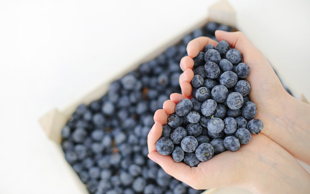 Blueberry antioxidants - what are they? What are the benefits? Read Arctic Flavors blog on blueberry antioxidants.