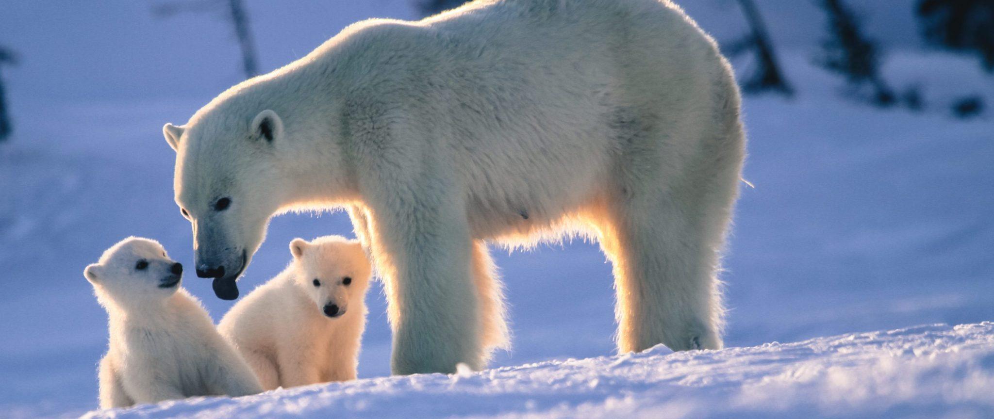 Wapusk National Park   Arctic Kingdom