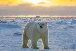 ArcticKingdom_James Roberts-9