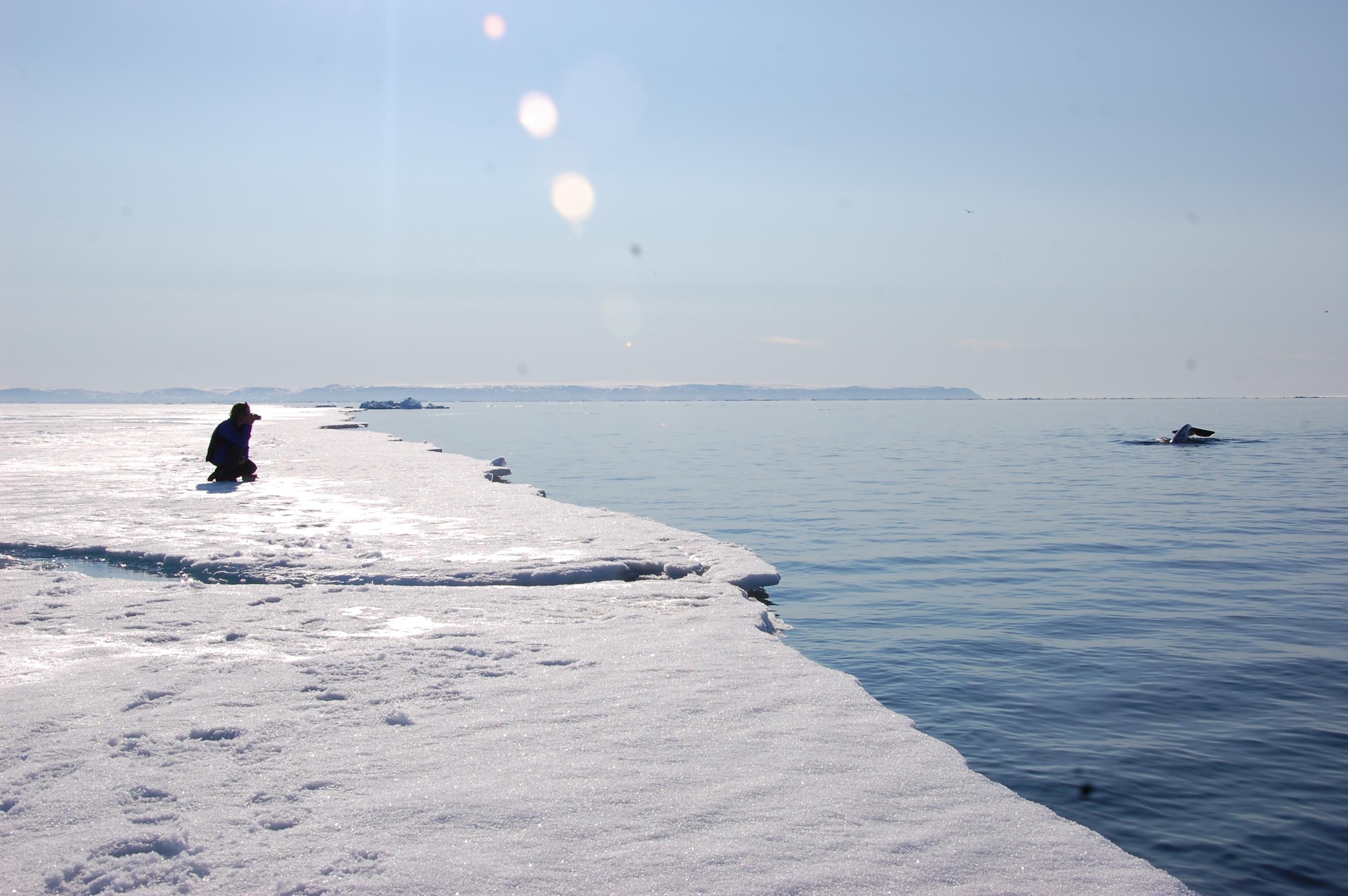 Arctic Kingdon - The Arctic Floe Edge