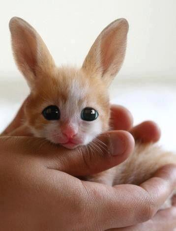 Petit Avec Des Grandes Oreilles : petit, grandes, oreilles, PETIT, GRANDES, OREILLES