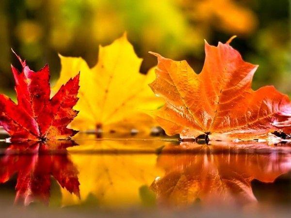 Fall Desktop Wallpaper Themes Paysages Automne