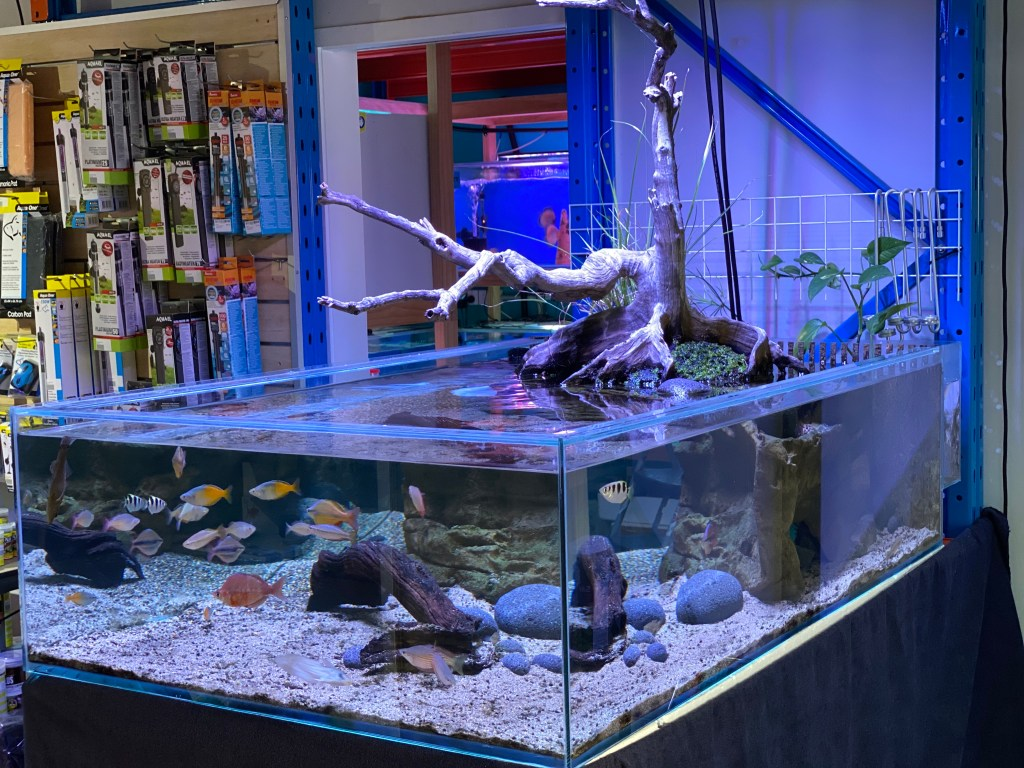 Arcy Aquariums Native Fish Display