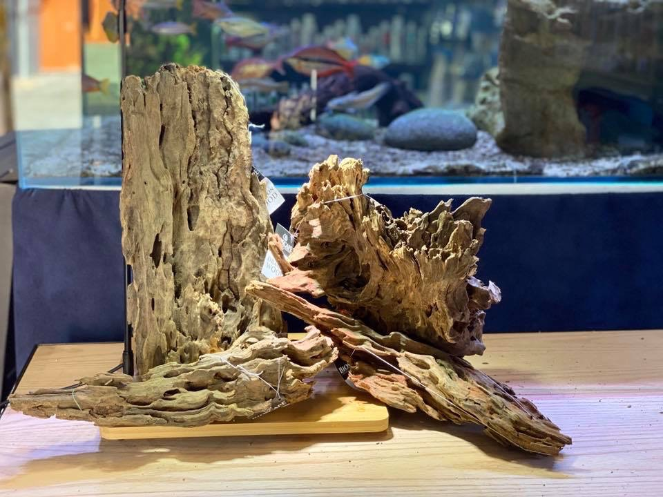 Dragon Wood Driftwood