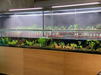 In-strore Plant Cabinet