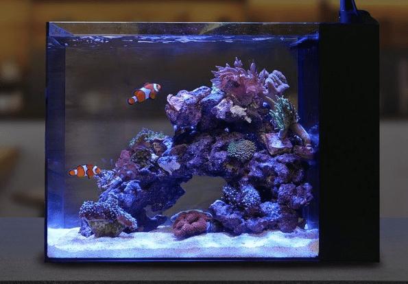 Waterbox peninsular mini
