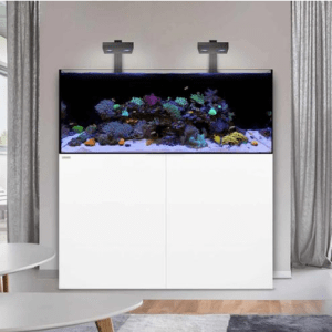 Waterbox Reef Aquarium