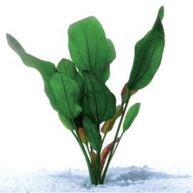 Echinodorus Kleineber