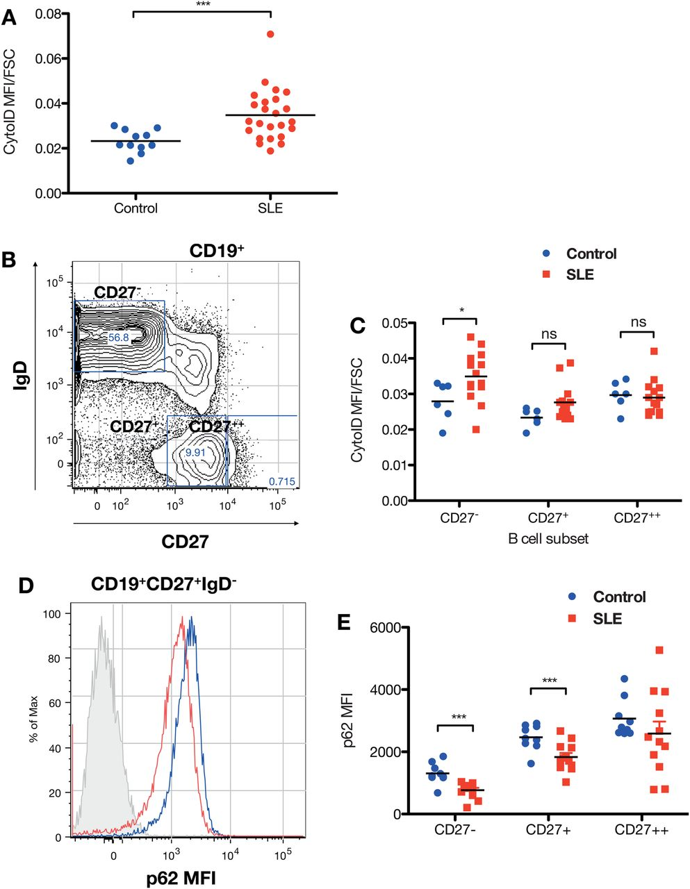 Autophagy is activated in systemic lupus erythematosus and