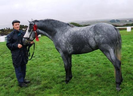 Bawn Dusty 3 year old All Ireland Champion Colt
