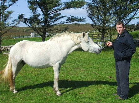 Kingstown Dana at home with owner Malachy Gorham