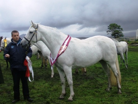 Grange Ruby Surf All Ireland Champion of 4 to 6 year old Mares