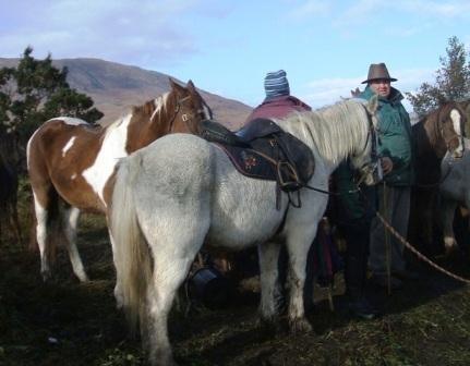 2-ponies-maam-cross-0271