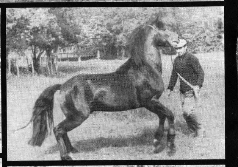man holding pony