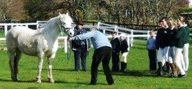 Philip Scott demonstrates the art of showing a pony in-hand for Pony Club members