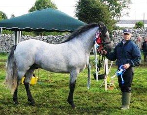 Glencarrig Romeo with Kieran McGrath, Reserve Supreme