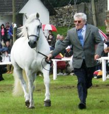 Linsfort Barney, 3rd in Stallion Class with Joe McNamara
