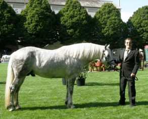 Cashelbay Cruise, 2nd in stallion Class, with Robbie Fallon