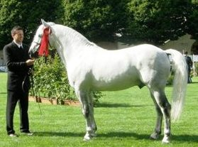 Winning Stallion Knockillaree Tomas with Roger Joyce