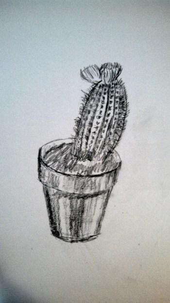 Cactus drawin 1