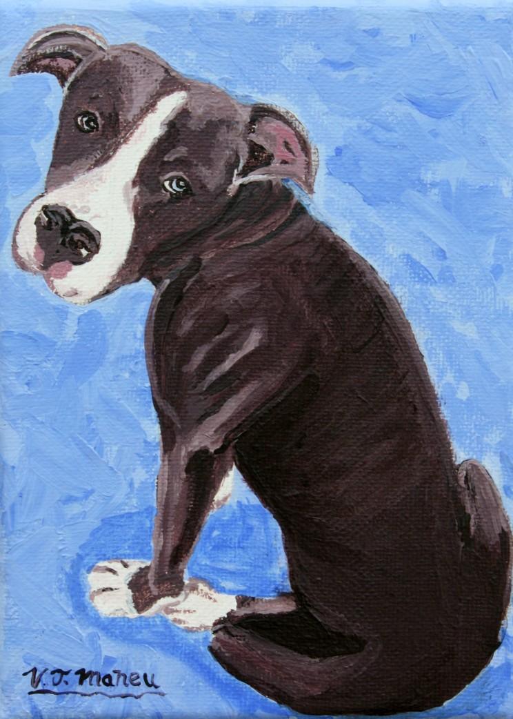 Pip Bull portrait