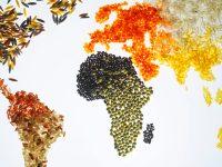 Η κρίση των τροφίμων: Υπάρχει διέξοδος;