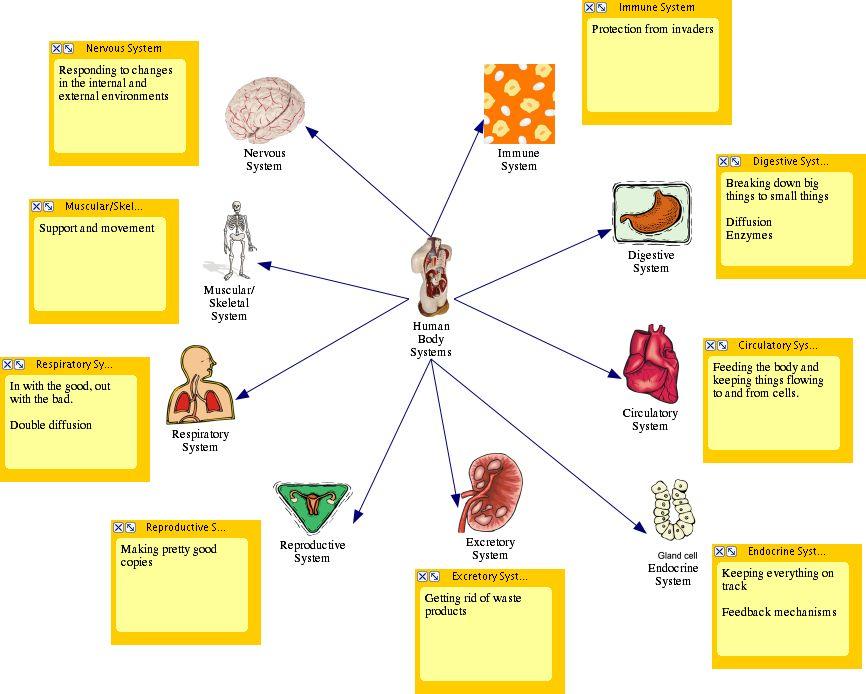 Simple Human Body Diagram Anatomy Body Diagram