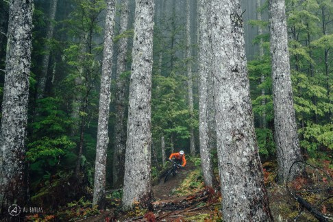 Sarah Leishman back among the big trees of Coastal BC