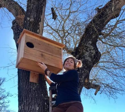 1st Barn Owl box