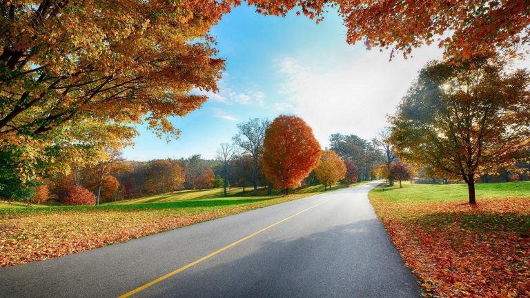 Download-1080p-Nature-Wallpaper-Free-768x432